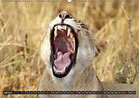 Katzen Afrikas (Wandkalender 2018 DIN A2 quer) Dieser erfolgreiche Kalender wurde dieses Jahr mit gleichen Bildern und a - Produktdetailbild 7