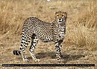 Katzen Afrikas (Wandkalender 2018 DIN A2 quer) Dieser erfolgreiche Kalender wurde dieses Jahr mit gleichen Bildern und a - Produktdetailbild 9