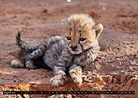 Katzen Afrikas (Wandkalender 2018 DIN A2 quer) Dieser erfolgreiche Kalender wurde dieses Jahr mit gleichen Bildern und a - Produktdetailbild 8