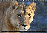 Katzen Afrikas (Wandkalender 2018 DIN A2 quer) Dieser erfolgreiche Kalender wurde dieses Jahr mit gleichen Bildern und a - Produktdetailbild 10
