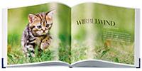 Katzenglück - Produktdetailbild 1