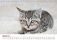 Katzenjahr 2018 (Tischkalender 2018 DIN A5 quer) - Produktdetailbild 2