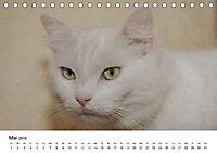 Katzenjahr 2018 (Tischkalender 2018 DIN A5 quer) - Produktdetailbild 5