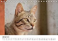 Katzenjahr 2018 (Tischkalender 2018 DIN A5 quer) - Produktdetailbild 1