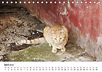 Katzenjahr 2018 (Tischkalender 2018 DIN A5 quer) - Produktdetailbild 4
