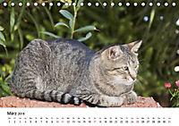 Katzenjahr 2018 (Tischkalender 2018 DIN A5 quer) - Produktdetailbild 3