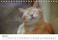 Katzenjahr 2018 (Tischkalender 2018 DIN A5 quer) - Produktdetailbild 6