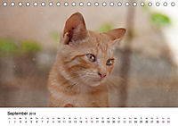 Katzenjahr 2018 (Tischkalender 2018 DIN A5 quer) - Produktdetailbild 9