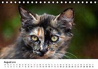 Katzenjahr 2018 (Tischkalender 2018 DIN A5 quer) - Produktdetailbild 8