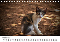 Katzenjahr 2018 (Tischkalender 2018 DIN A5 quer) - Produktdetailbild 10