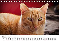 Katzenjahr 2018 (Tischkalender 2018 DIN A5 quer) - Produktdetailbild 11