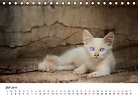Katzenjahr 2018 (Tischkalender 2018 DIN A5 quer) - Produktdetailbild 7