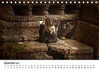 Katzenjahr 2018 (Tischkalender 2018 DIN A5 quer) - Produktdetailbild 12