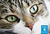 Katzenpoesie Tischkal. 2017 - Produktdetailbild 9