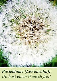 Lasst Blumen sprechen! (Posterbuch DIN A4 hoch) - Produktdetailbild 4