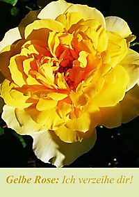 Lasst Blumen sprechen! (Posterbuch DIN A4 hoch) - Produktdetailbild 2