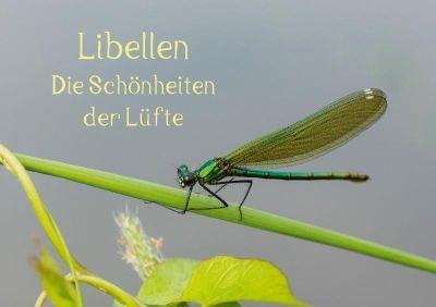 Libellen - Die Schönheiten der Lüfte (Tischaufsteller DIN A5 quer), Andrea Potratz
