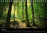 Lichter der Natur (Tischkalender 2018 DIN A5 quer) - Produktdetailbild 4