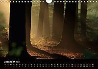 Lichter im Wald (Wandkalender 2018 DIN A4 quer) - Produktdetailbild 12
