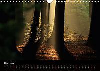 Lichter im Wald (Wandkalender 2018 DIN A4 quer) - Produktdetailbild 3