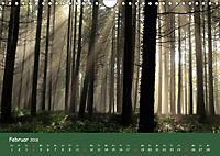 Lichter im Wald (Wandkalender 2018 DIN A4 quer) - Produktdetailbild 2