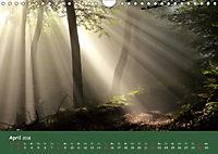 Lichter im Wald (Wandkalender 2018 DIN A4 quer) - Produktdetailbild 4
