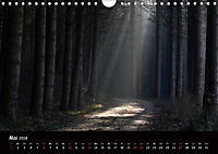 Lichter im Wald (Wandkalender 2018 DIN A4 quer) - Produktdetailbild 5