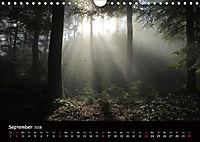 Lichter im Wald (Wandkalender 2018 DIN A4 quer) - Produktdetailbild 9