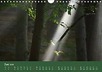 Lichter im Wald (Wandkalender 2018 DIN A4 quer) - Produktdetailbild 6