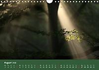 Lichter im Wald (Wandkalender 2018 DIN A4 quer) - Produktdetailbild 8