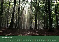 Lichter im Wald (Wandkalender 2018 DIN A4 quer) - Produktdetailbild 11