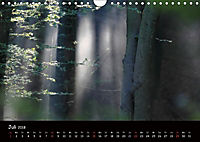 Lichter im Wald (Wandkalender 2018 DIN A4 quer) - Produktdetailbild 7