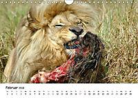 Löwen Impressionen (Wandkalender 2018 DIN A4 quer) - Produktdetailbild 2