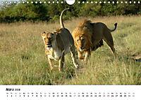 Löwen Impressionen (Wandkalender 2018 DIN A4 quer) - Produktdetailbild 3