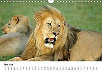 Löwen Impressionen (Wandkalender 2018 DIN A4 quer) - Produktdetailbild 5