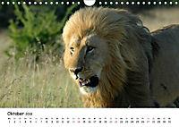 Löwen Impressionen (Wandkalender 2018 DIN A4 quer) - Produktdetailbild 10
