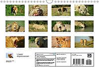 Löwen Impressionen (Wandkalender 2018 DIN A4 quer) - Produktdetailbild 13