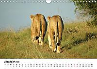 Löwen Impressionen (Wandkalender 2018 DIN A4 quer) - Produktdetailbild 12