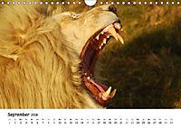 Löwen Impressionen (Wandkalender 2018 DIN A4 quer) - Produktdetailbild 9