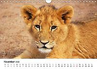 Löwen Impressionen (Wandkalender 2018 DIN A4 quer) - Produktdetailbild 11