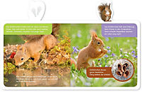 Mein kleines Tier-Lexikon - Das Eichhörnchen - Produktdetailbild 2