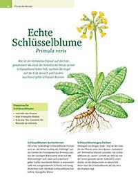 Mit Ursel Bühring durchs Heilpflanzenjahr - Produktdetailbild 5
