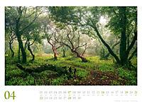 Mythos Wald 2019 - Produktdetailbild 4