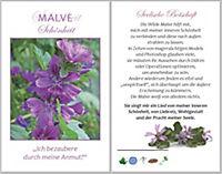 Natürlich heilen - Immunkraft stärken, m. 40 Karten - Produktdetailbild 3