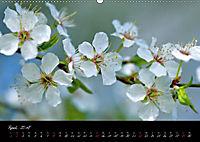 Naturfarben 2018 (Wandkalender 2018 DIN A2 quer) - Produktdetailbild 4