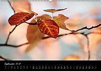 Naturfarben 2018 (Wandkalender 2018 DIN A2 quer) - Produktdetailbild 9