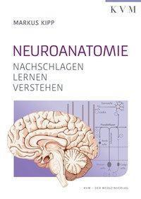 Neuroanatomie, Markus Kipp, Kalinka Radlanski