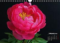 Peony Rose Without Thorns (Wall Calendar 2018 DIN A4 Landscape) - Produktdetailbild 2