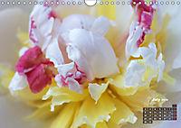 Peony Rose Without Thorns (Wall Calendar 2018 DIN A4 Landscape) - Produktdetailbild 7