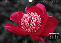 Peony Rose Without Thorns (Wall Calendar 2018 DIN A4 Landscape) - Produktdetailbild 11